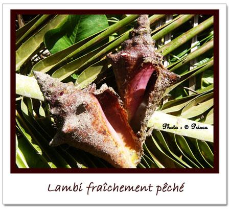Lambi-fraîchement-pêché